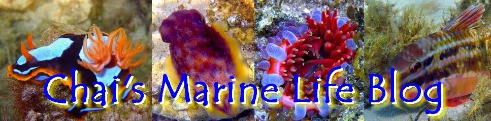 Chai's Marine Life Blog