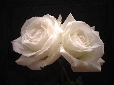 Mi libretita o cuaderno de apuntes Dos+rosas+blancas