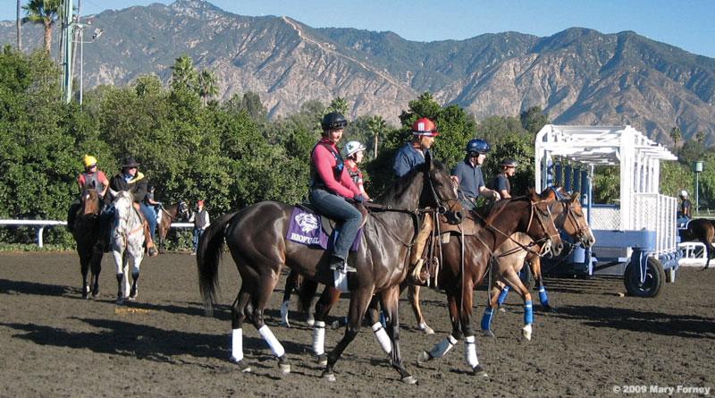 Breeders Cup Horses 2009