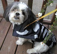 Merlin in his skeleton costume