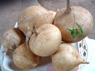 singkamas-food+recipes.JPG