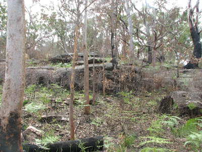 Burnt out, Lane Cove National Park, Sydney, New South Wales