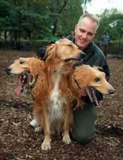 Anjing Berkepala 3