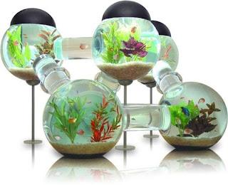 10 Aquarium Dengan bentuk Yang Menarik