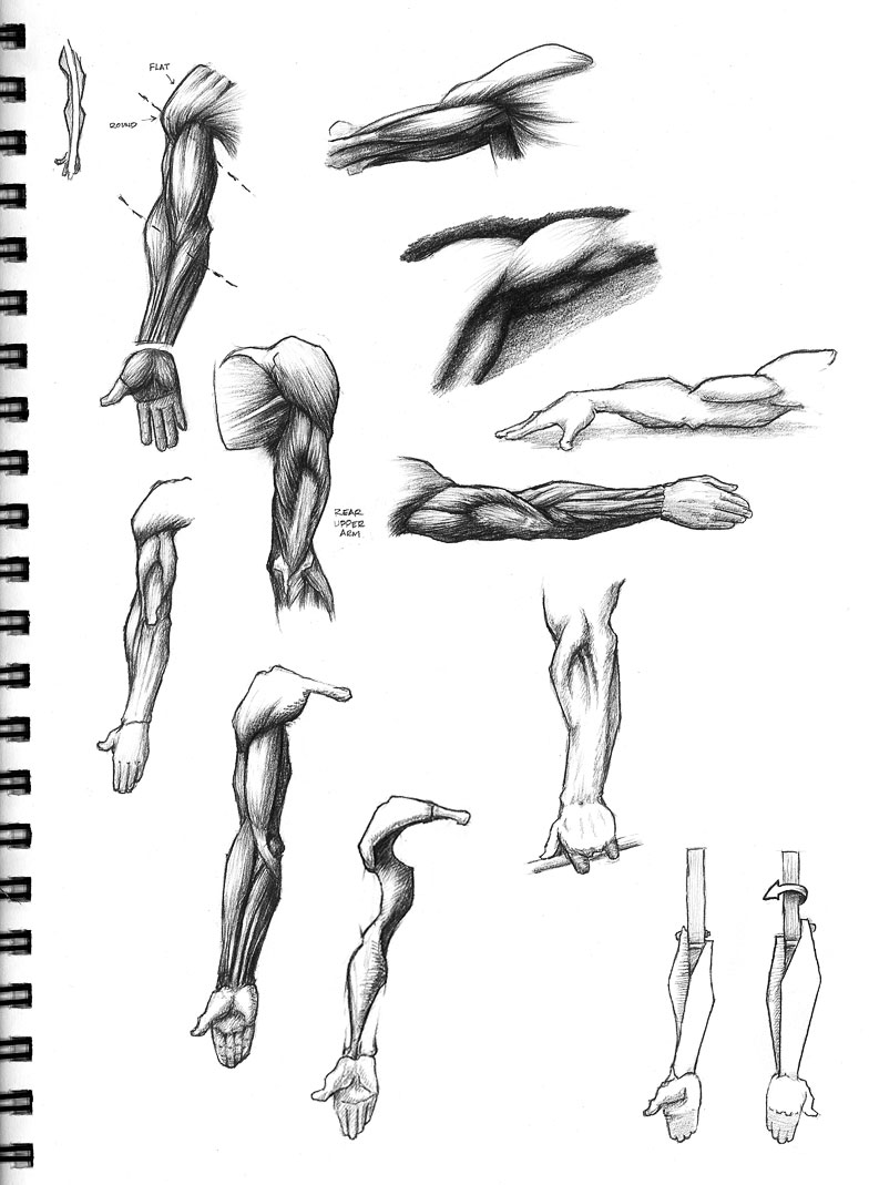 Rich Adams Fine Art: Arm studies