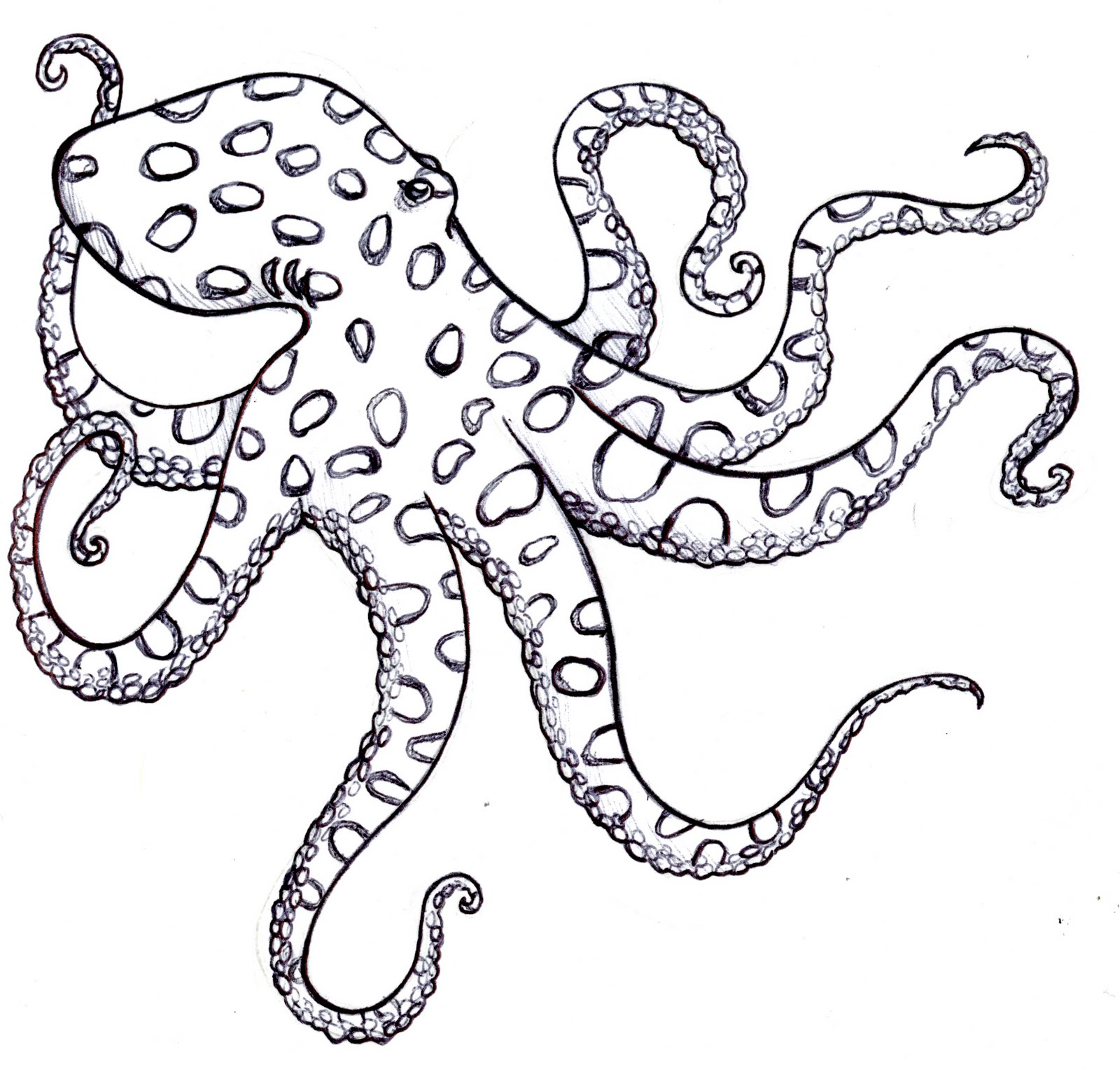 Simple octopus template the image kid for Simple octopus drawing