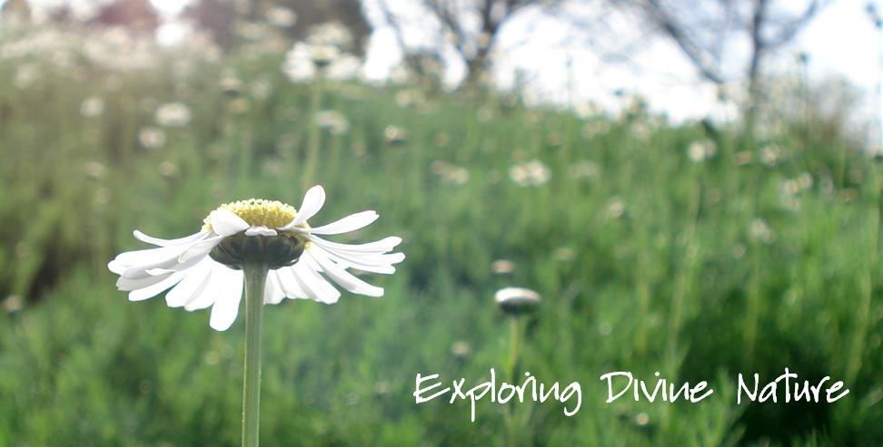 Exploring Divine Nature