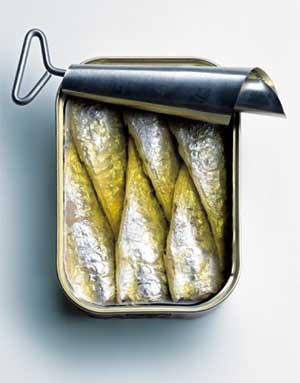 Can Dogs Eat Herring
