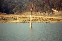 Jim Corbett National Park-Flora