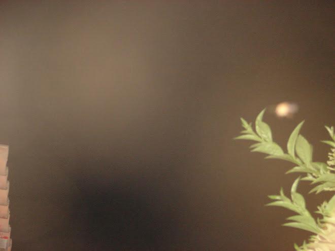 15febrero,ultimos extraordinarios avistamientos,ovni en nibiru,15,2010,contacto