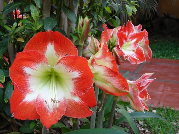 14-noviembre-15-16-17...2010...somos de Venus & sus flores Nardos
