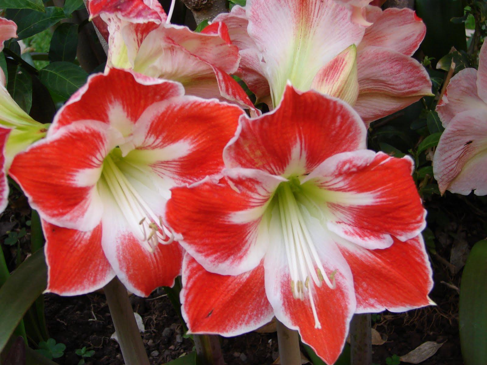 14-noviembre-15-16-17...2010 Diosas Flores Hermosas...