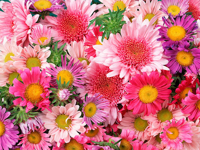 free flowers wallpapers. FLOWER WALLPAPERS JAN10