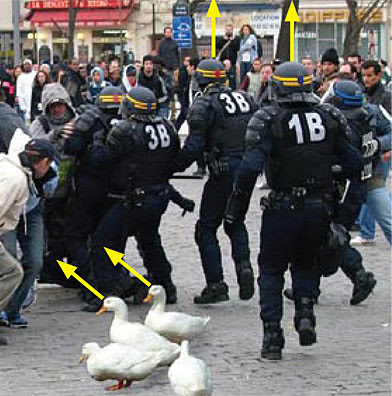 Ducks and Police Photo Manipulation