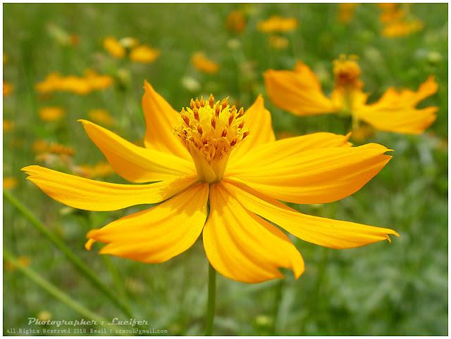 Camera Photo Cosmos Flower