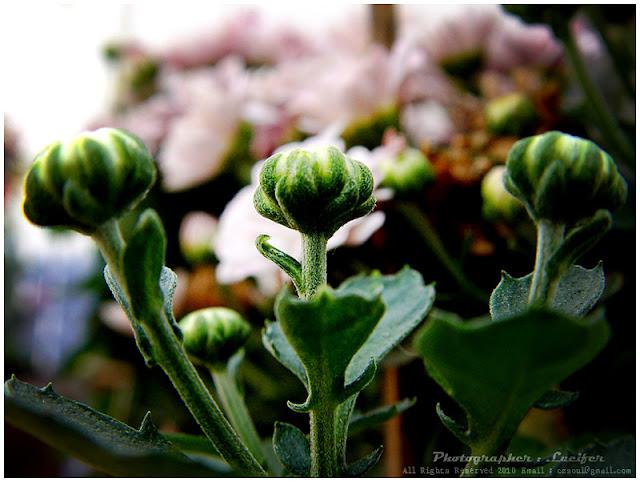Camera Photograph Flower