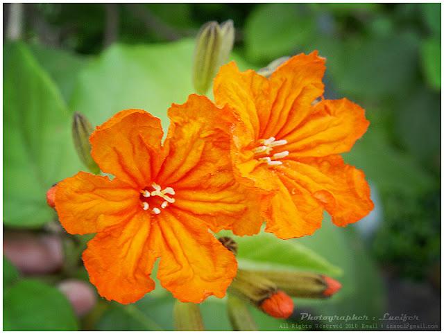 photograph flower orange colour