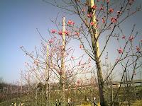 ハナモモが咲いて