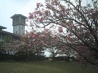 桜の位置から本館を見る