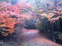 錦秋の散策路