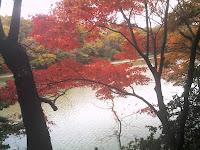岩本池にかかる紅葉