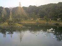 白鳥庭園 中の池で遊ぶ水鳥