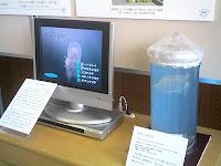 名古屋大学博物館のノーベル賞コーナーで(オワンクラゲ)