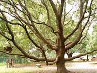 木登りしたくなるような…