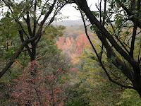 木の間の紅葉