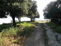 El Bosc de Còdol