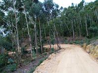 Plantació d'eucaliptus a prop dels dipòsits