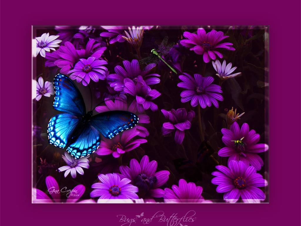 PICTURES: Butterfly Wallpapers
