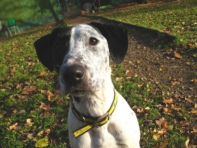 Dogs Trust Canterbury Dogs Needing Homes