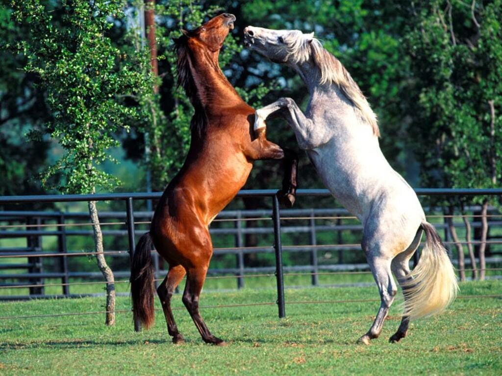 http://2.bp.blogspot.com/__ePjErwy054/TONvlmgSR8I/AAAAAAAAByI/UEQ6l93J2w8/s1600/caballos-andaluces-.jpg
