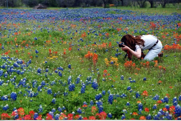 Photographing the wildflowers