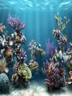 Samsung Corby Wallpapers Nature - Aquascape