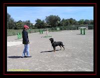 pastor australiano no dog spa com a Associação Amigo do Rottweiler