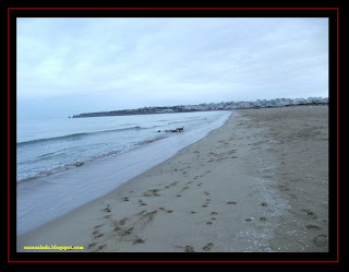 pastor australiano e golden retriever na meia praia