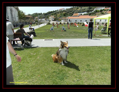 agility trial in Alenquer