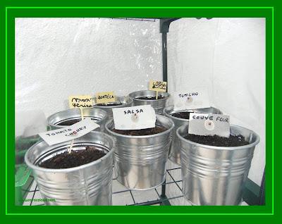sementeira especiarias