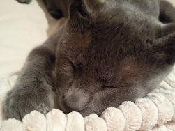 Mi Gato Blus