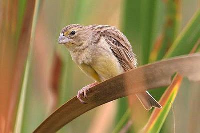 Los pájaros más bonitos de la Argentina [MEGAPOST]