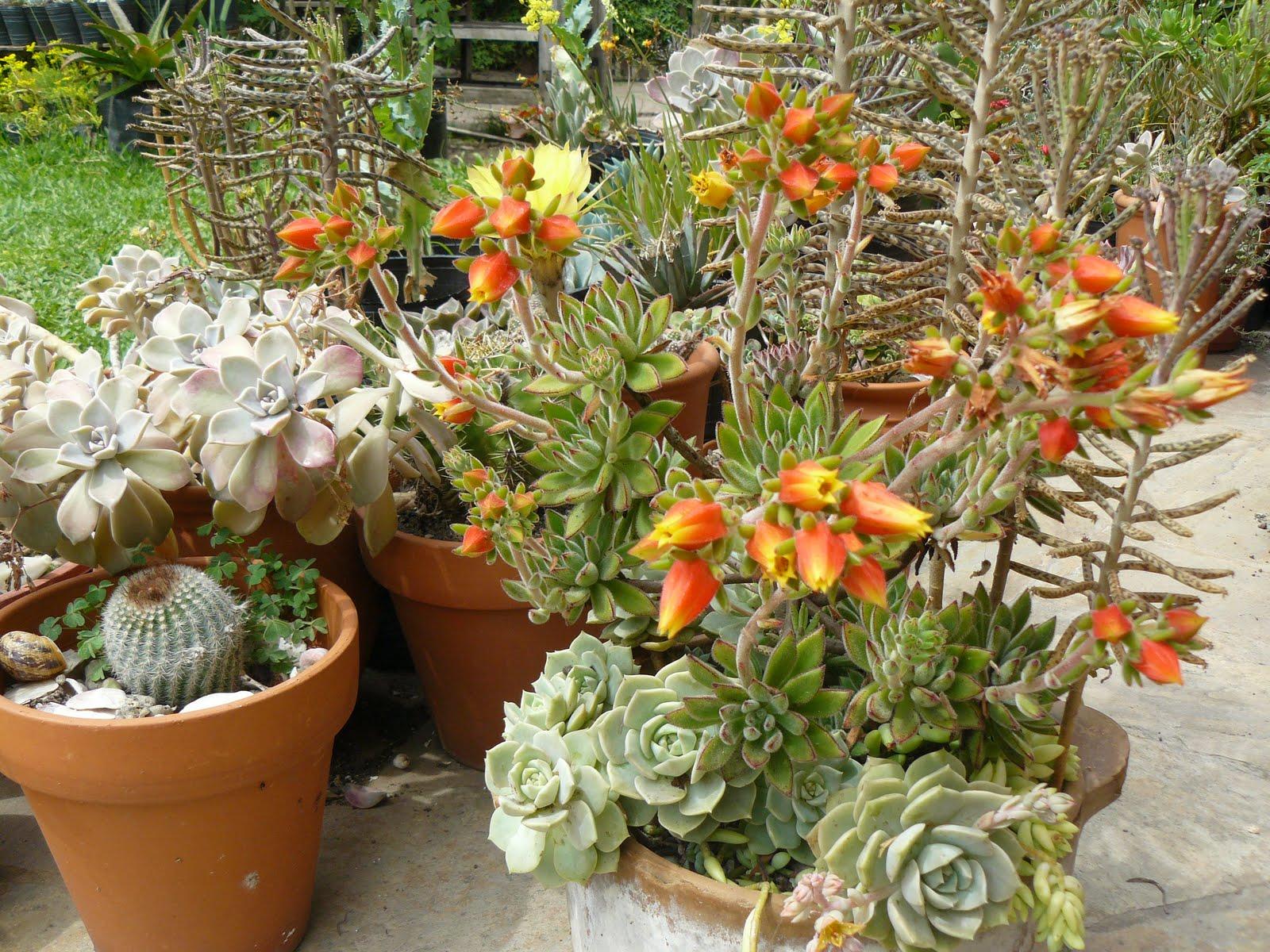 Jardines de cactus y suculentas peque o jard n for Jardines con cactus
