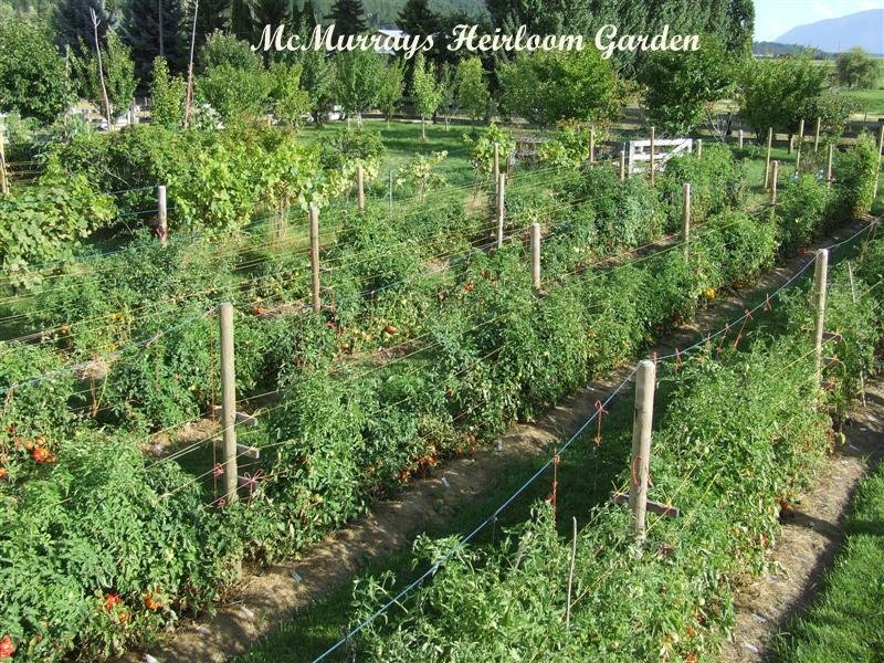 McMurray's Heirloom Garden