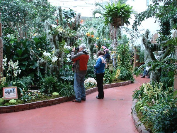 Growing greener in the pacific northwest orchid show at - Orchid show missouri botanical garden ...