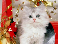 Free Christmas Kitten Wallpapers