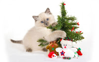 Christmas Kitten Desktop Wallpapers
