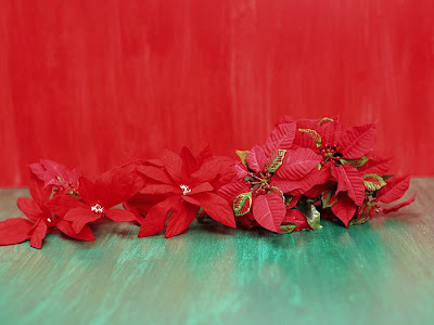 poinsettia wallpaper for desktops