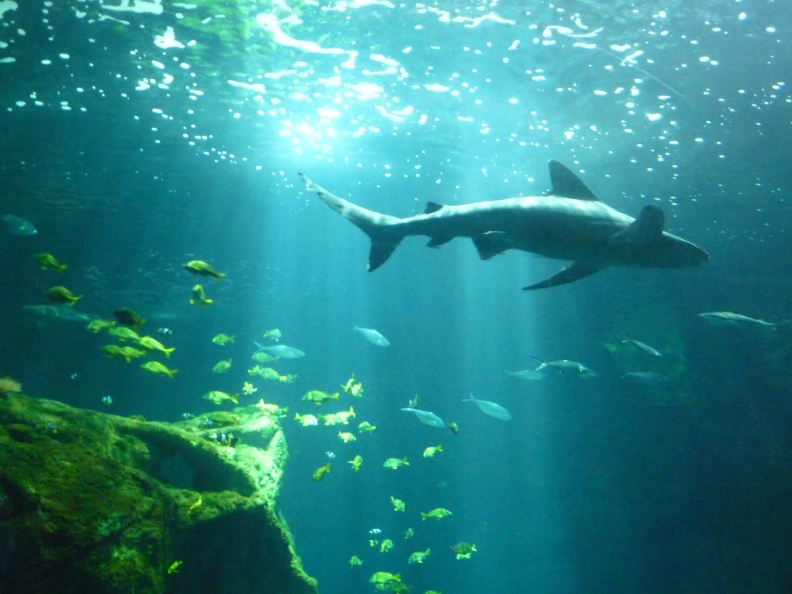 BARBOUILLES DE GNOU: Aquarium de la Rochelle