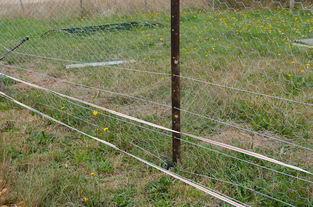 Checking Electric Fence With Voltmeter : A little piece of green keeping pigs in or out